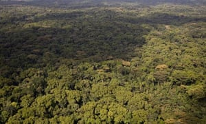 MDG : Landgrab in Liberia : Aerial view of Liberian Rainforest