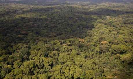MDG : Landgrab in Liberia : Aerial view of Liberian Rainforest