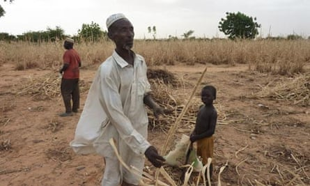 MDG : Sahel food crisis  : a man from Niger in his ravaged field due to drought