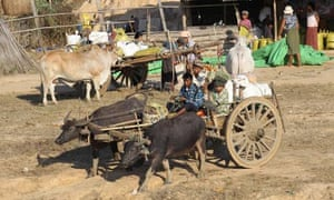 MDG : Myanmar alias Burma today : A Myanmarese family heads back home on a buffalo-locked cart