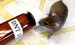 Neuroscience : MouSensor a genetically-modified mice to sniff out landmines