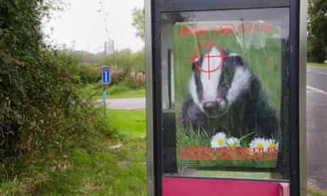 Badger Cull :  Posters put up by campaigners opposed to the culling of badgers.