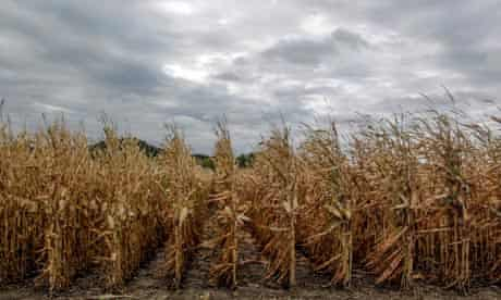 MDG drought