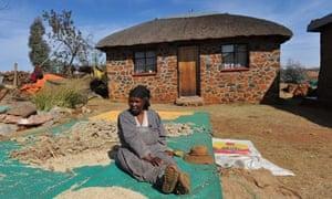 MDG : Lesotho Food security : beating sorghum