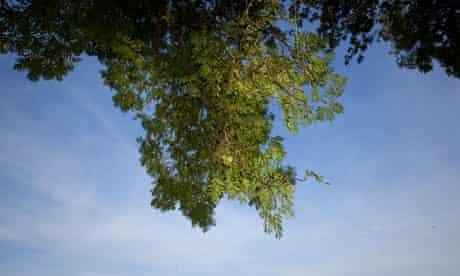 Ash tree near Hoxne, Suffolk