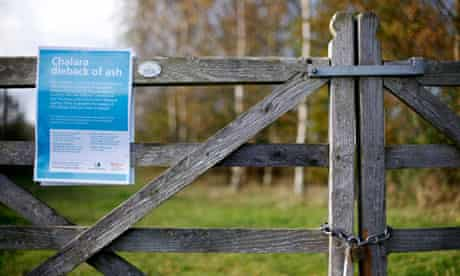 A sign warns of ash trees infected with Chalara dieback,  Woodland Trust Site near Framlingham