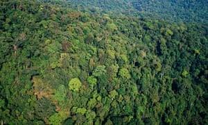 MDG : Loas-Vietnam border : Annamites Range, Nakai Nam Theun Conservation Area Laos