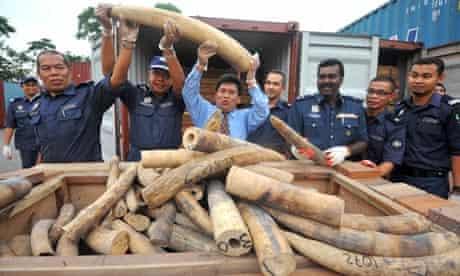 Malaysian customs officers pose as they display elephant tusks in Kuala Lumpur, Malaysia