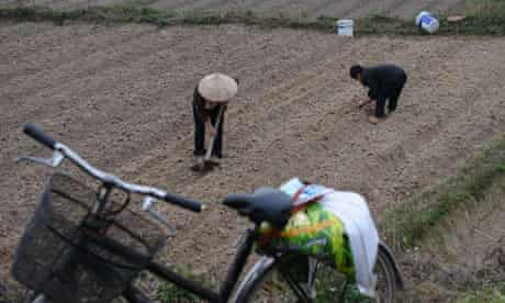 MDG : agricultural investment : farmer family growing peanut, Vietnam