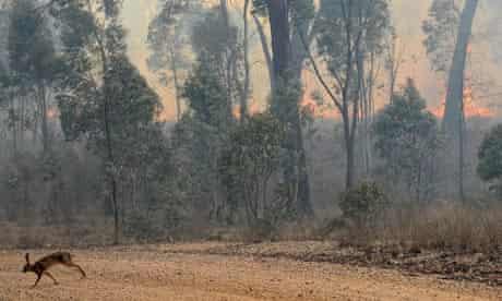 A rabbit flees a bushfire near the town of Rylstone, northwest of Sydney Australia