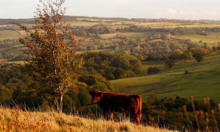 Grassland of The Cotswolds in Cheltenham