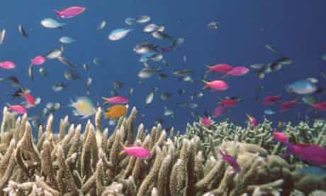 The Global Partnership for Oceans launched at World Ocean Summit : Australia's Great Barrier Reef
