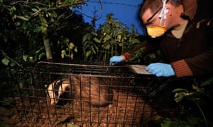 Damian blog : The Badger TB vaccination programme