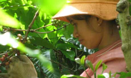 MDG : Sustainable coffee in Vietnam