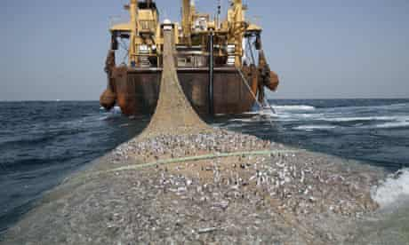 Over fishing along West Africa coast : The Afrika Super Trawler near Maurirania