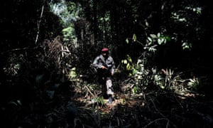 Environmental crime : illegal logging in Amazonic forest reserve of Trairao