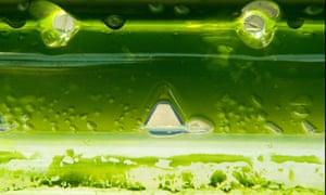 Damian blog : Microalgae