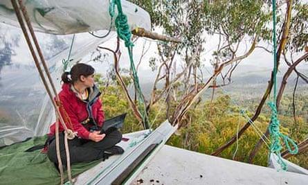 Miranda Gibson in her tree-top home looks over rainforest in Tasmania.