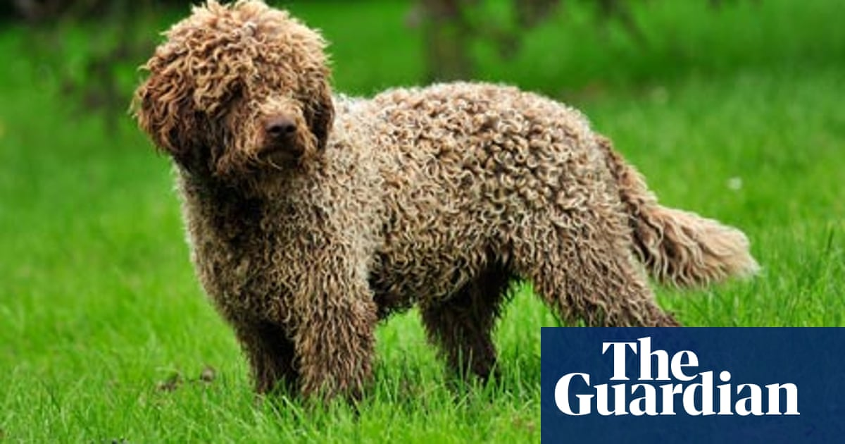 Country diary: Cucklington, Somerset: Tale of a truffle