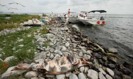 Deepwater Horizon oil spill cost : A dead dolphin marked with spray paint
