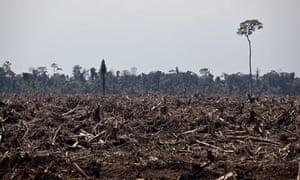 paper on deforestation