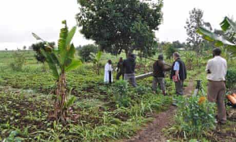 MDG : Kenya : The Shamba Shape-Up team film on George Mungai's farm in Limuru