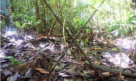 Oil company Perenco and uncontacted tribe of Peru