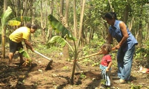 MDG : El Salvador : Energy Forests, the Feminine Art of Reforesting, planting plantain seedlings