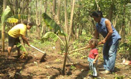 MDG : El Salvador : Energy Forests, the Feminine Art of Reforesting, planting plantain seedlings