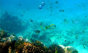 Marine life at the Malindi Marine National Park , Kenya