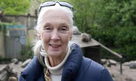 British Primatologist Jane Goodall