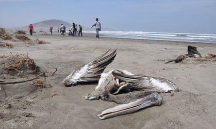 The carcass of a pelican is seen washed ashore at the beach of Port Eten in Peru