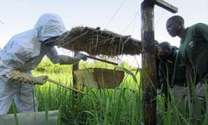 MDG : Beehive fences in western Uganda