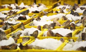 EU Fishing policy : Fish for sale at Grimsby Fish Auction