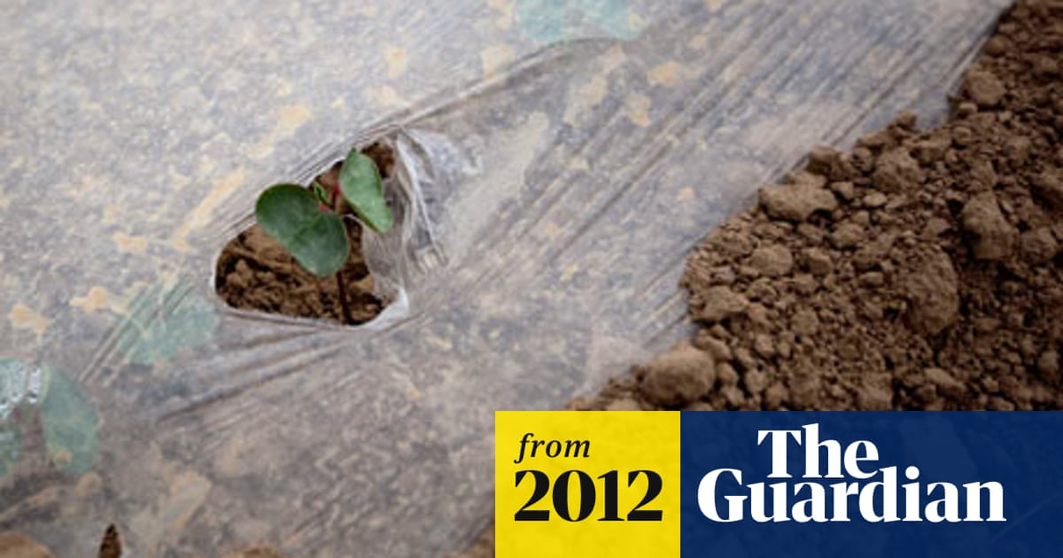 GM crops good for environment, study finds | Environment | The Guardian