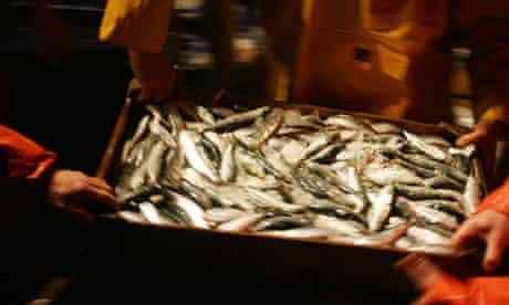 EU fishing quota : Crew members of the fishing trawler in Vigo, Spain