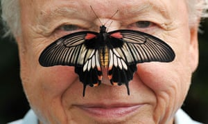 Butterfly Conservation President Sir David Attenborough