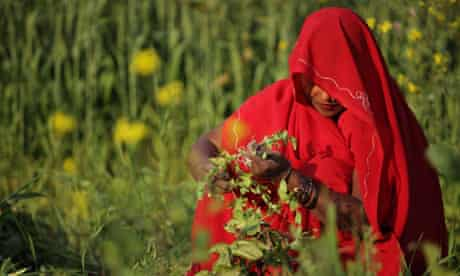 MDG : India food safety : woman working in field