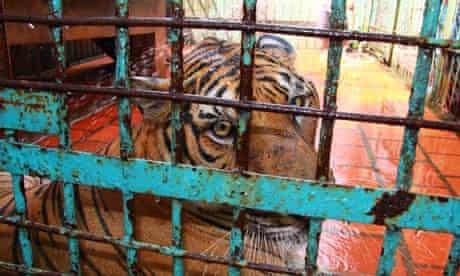 Tiger farm in southern Binh Duong province, Vietnam