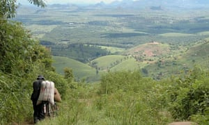 MDG : Agriculture in Mozambique : Tea plantation