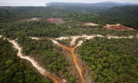 MDG : Land grab in Papua New Guinea : logging and deforatation