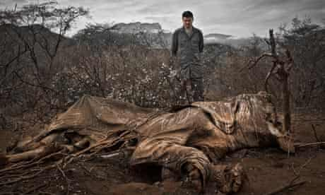 Chinese Superstar Yao Ming Encounters Poached Elephant in Northern Kenya