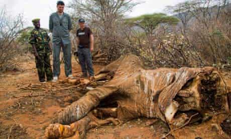 Yao Ming visits Kenya to raise awareness for WildAidon poaching ivory in Kenya