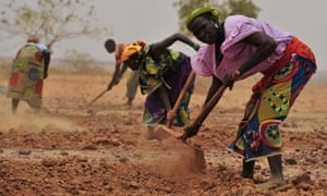 MDG : Food crisis in Niger