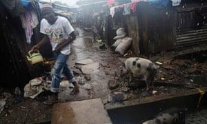 MDG : Sierra Leone cholera otbreak : pouring rain as pigs graze in slum of Susan's Bay in Freetown