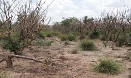 MDG : Drought in Tanzania : Great Ruaha River is completely dry for three months at a stretch