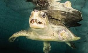Maldivian Sea Turtle Conservation Programme , Maldives