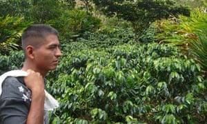MDG : Mark Tran in Guatemala : Coffee grower Rolando Rax in Raxnam village
