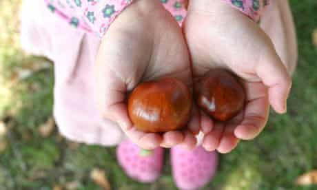 Few UK children connected to nature : Girl's hands holding conkers, Autumn