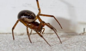 Who S Afraid Of The Noble False Widow Environment The